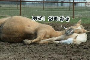 微播江湖230期 动物大联欢(下)