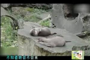 家庭幽默录像动物篇