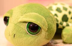 小乌龟毛绒图片