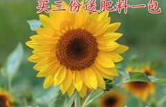 盆栽花草四季图片