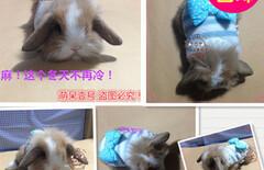 宠物兔子衣服图片
