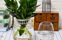 透明玻璃绿萝花瓶图片