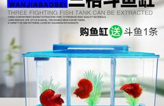 水晶虾缸灯图片