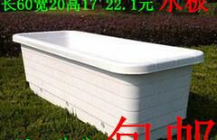 长条盆特大号阳台种菜盆图片
