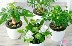 盆栽植物阳台含盆图片