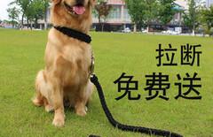 大型训犬刺激链图片