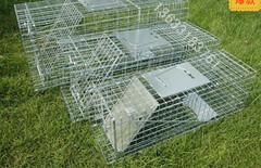 人道折叠式捕猫笼器图片