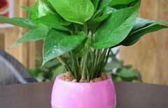 懒人盆栽植物室内吸水图片