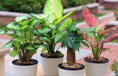 盆栽绿植客厅图片